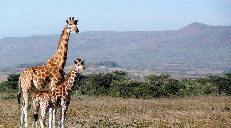 Un devis gratuit pour demander un visa dédié au Kenya